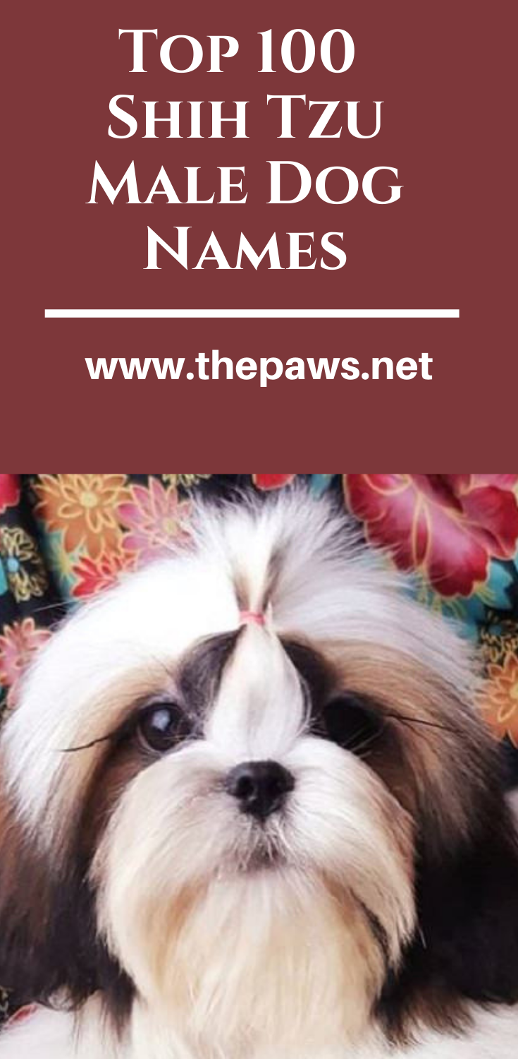 Top 100 Shih Tzu Male Dog Names Dog Names Dog Names Male Cute Names For Dogs
