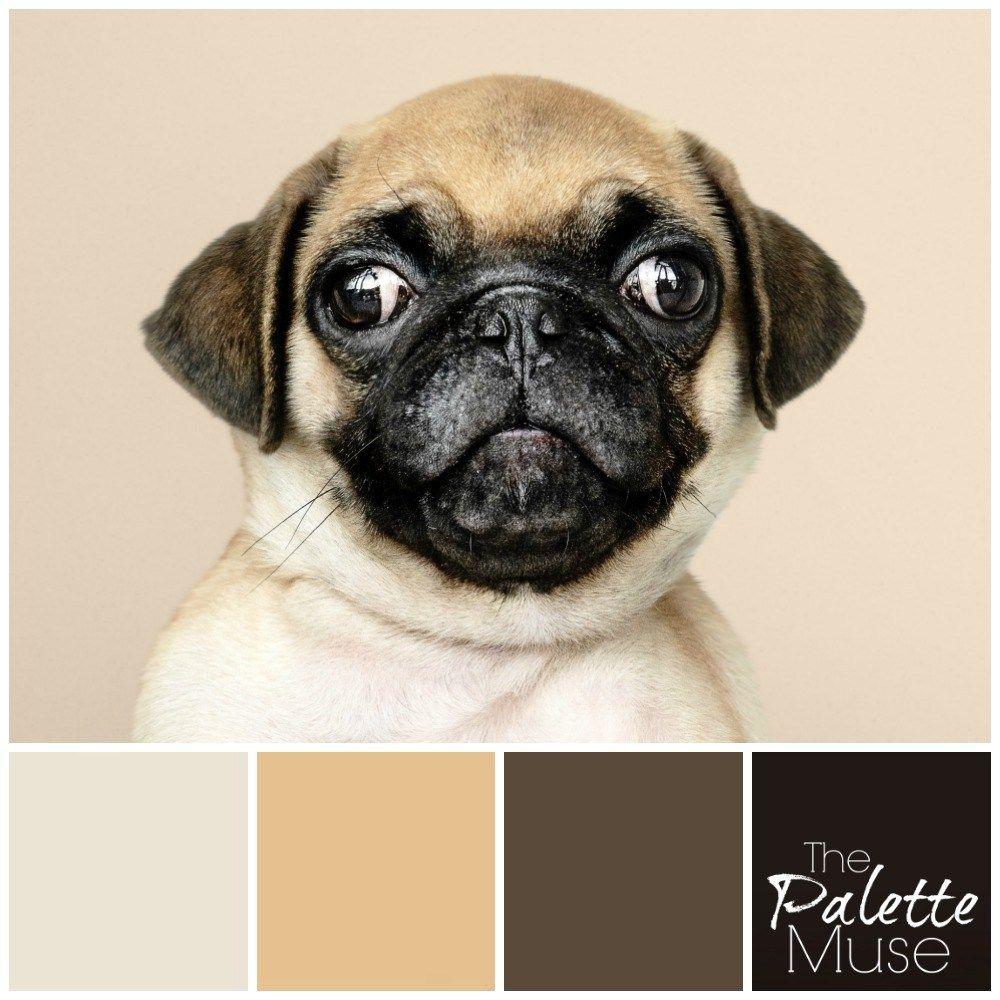 Pug Palette And The Dog Days Of Summer Pugs Palette Dog Days