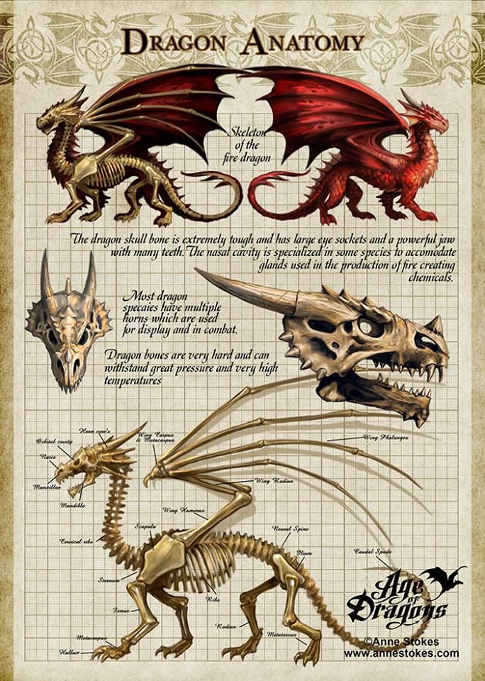 Dragon Anatomy by Anne Stokes | draconic wicca | Pinterest ...
