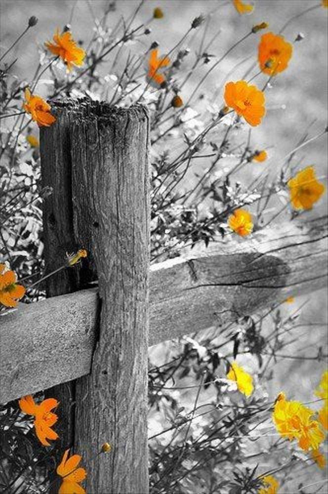 Schwarz Weiss Mit Farbeffekt Black White With Color Effect Mohnblume Poppy Color Splash Photography Color Splash Colorful Landscape