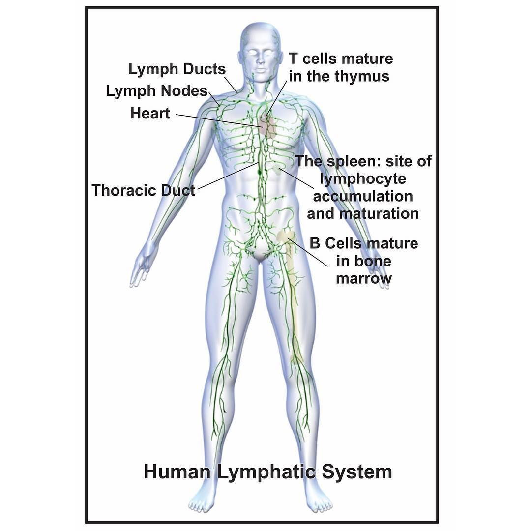 What Does Pressotherapy Equipment Do It Stimulates The Lymphatic