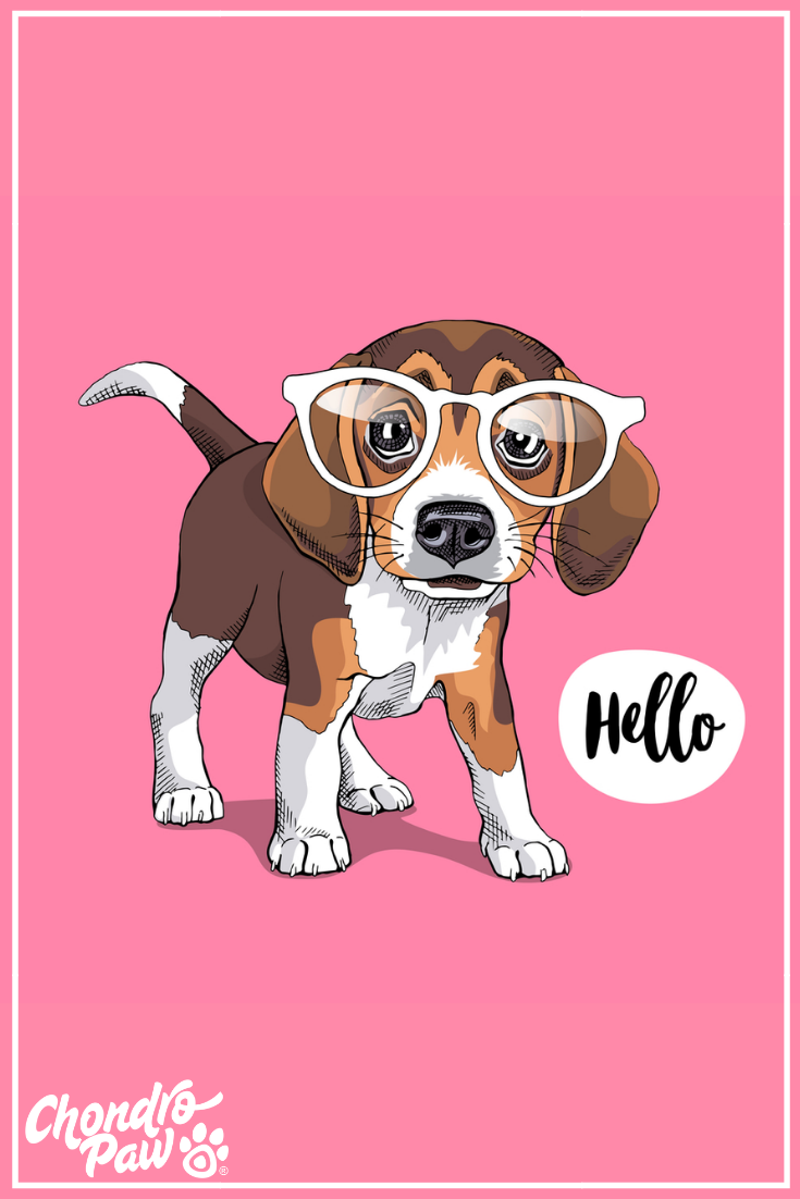 Puppy Beagle In A Glasses On A Pink Background Cute Dog Drawing Puppy Wallpaper Iphone Custom Pet Art
