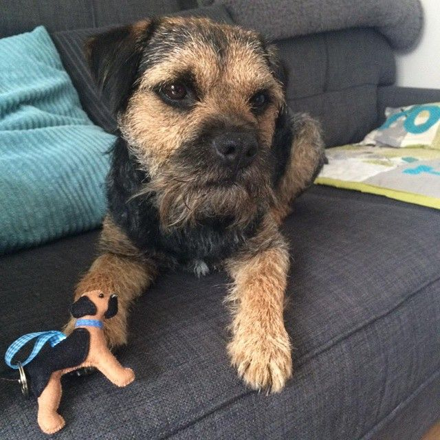 Toby The Gorgeous Border Terrier With His New Blue Tan Keyring