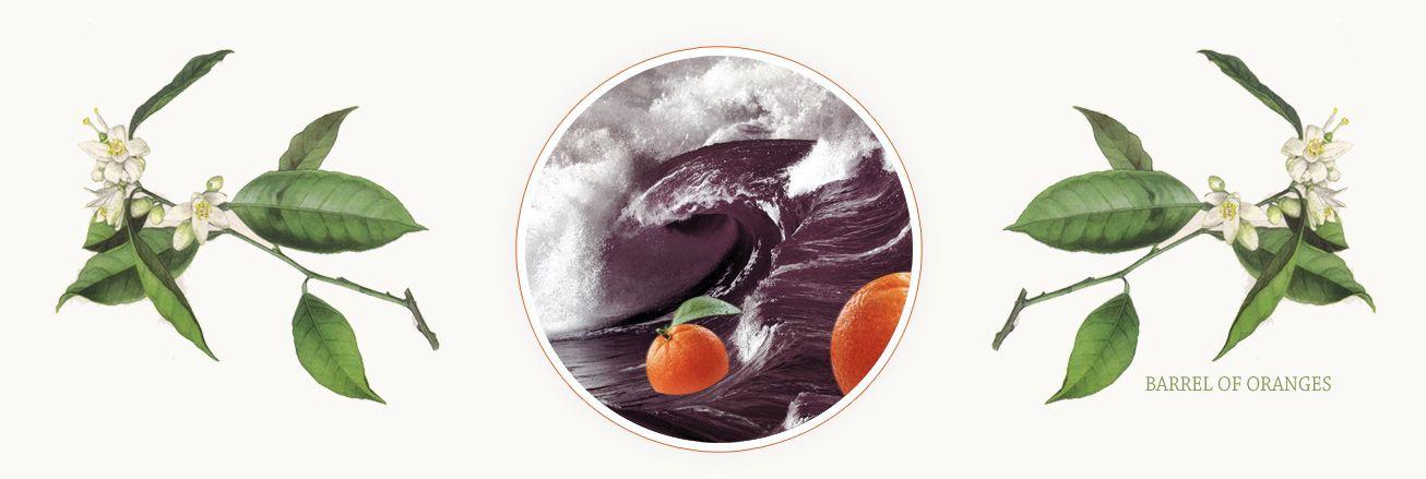 000 Barrel Of Oranges Humanism Meets Activism