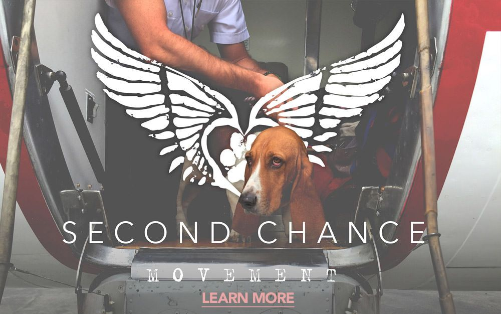 Shop Second Chance Movement Every Second Chance Movement