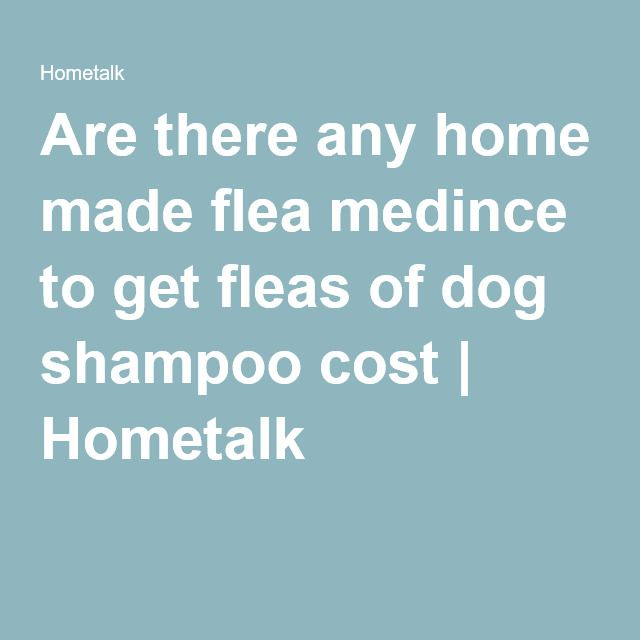 Are there any home made flea medince to get fleas of dog shampoo cost | Hometalk