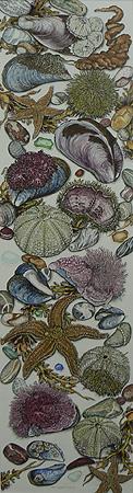 Mimi Carpenter - Original Opaque Gouache & Watercolors, Maine Shoreline Still Lifes