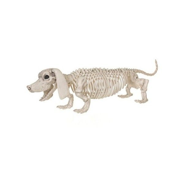 Halloween Dachshund Skeleton Ivory 15 Liked On Polyvore Featuring Home Home Decor Holiday Decorations Dog Skeleton Halloween Skeletons Target Halloween