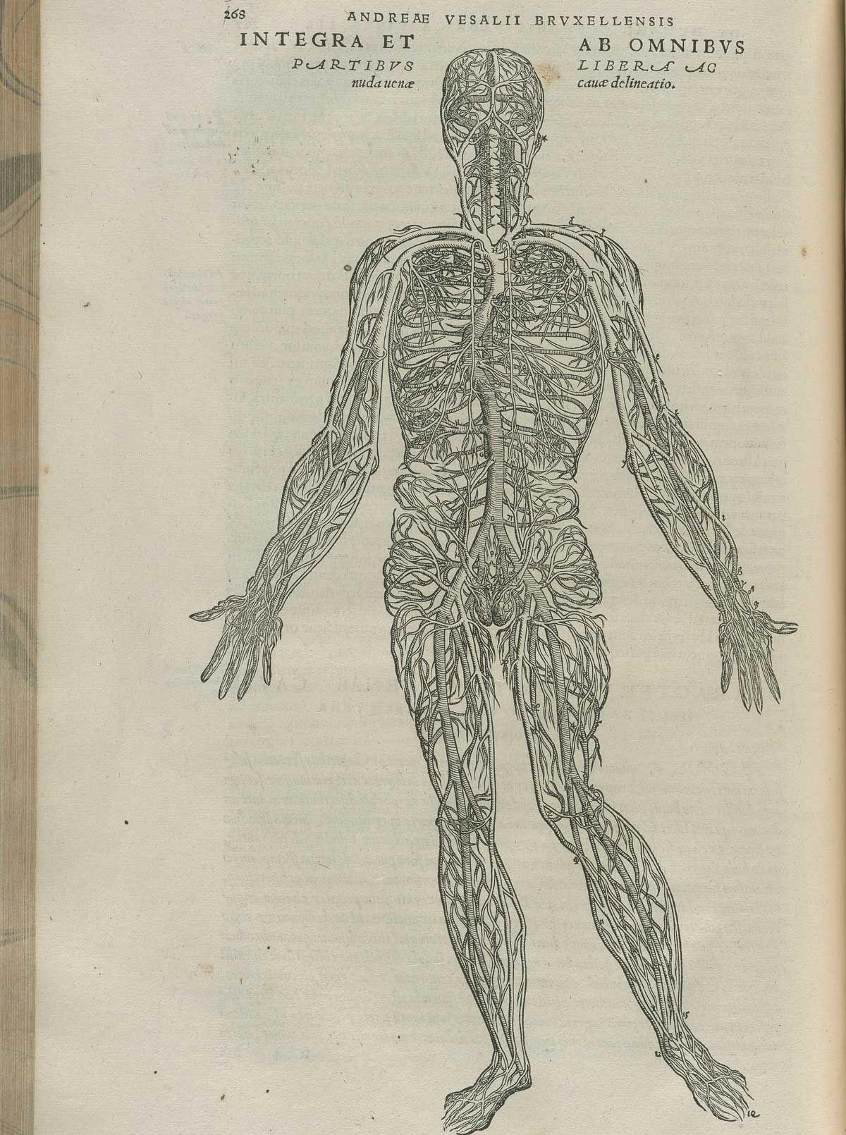 Andreas Vesalius De Corporis Fabrica Anatomy Pinterest