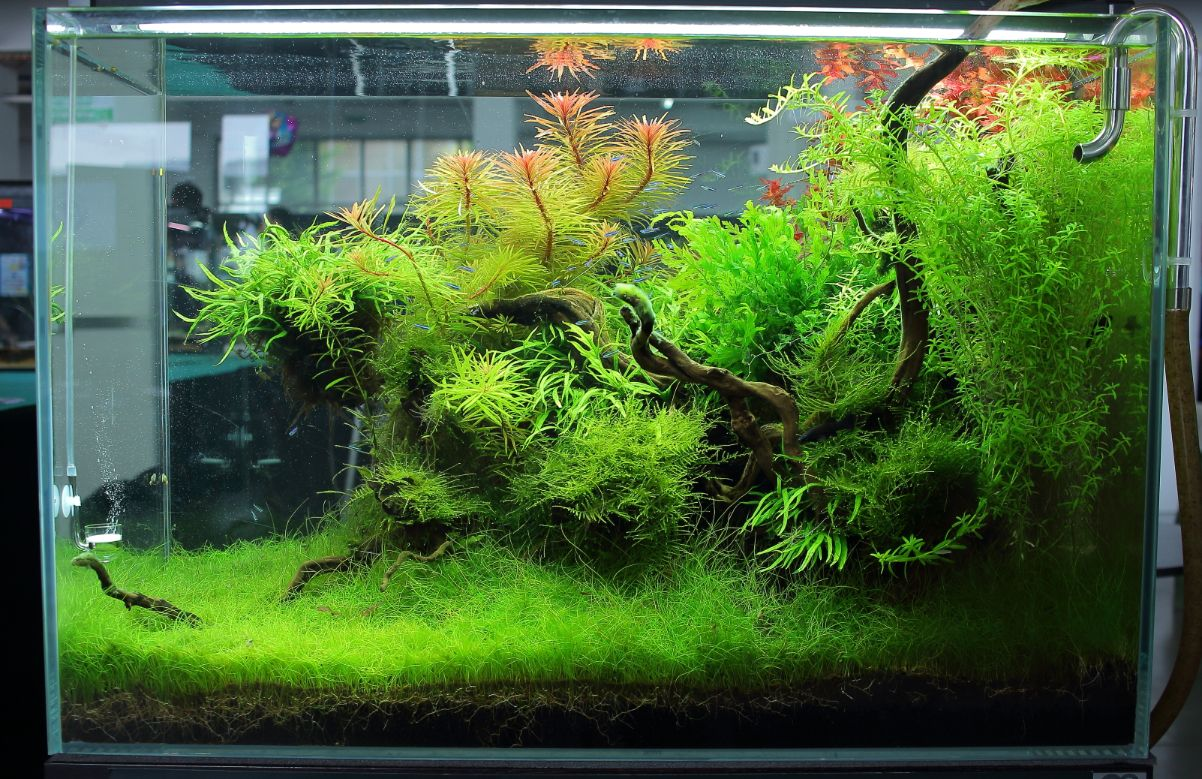 240l Marcin Maslowski Aquascape Pinterest Aquarium