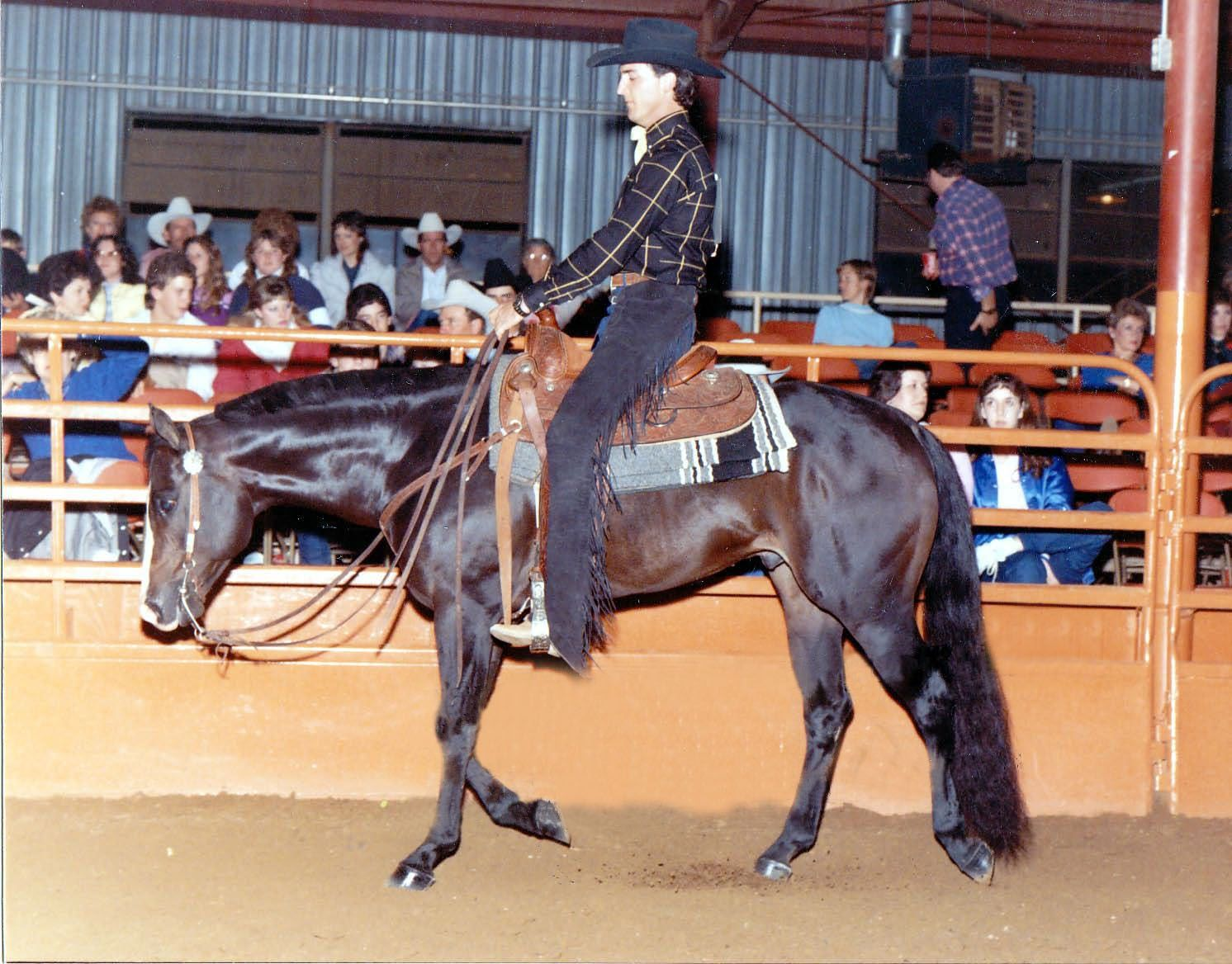 My all-time favorite AQHA stallion, Dynamic Deluxe. Addy's grand sire.