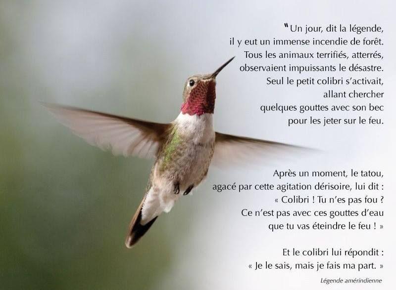 Légende amérindienne:le colibri | La légende du colibri, Colibri, Pierre  rabhi