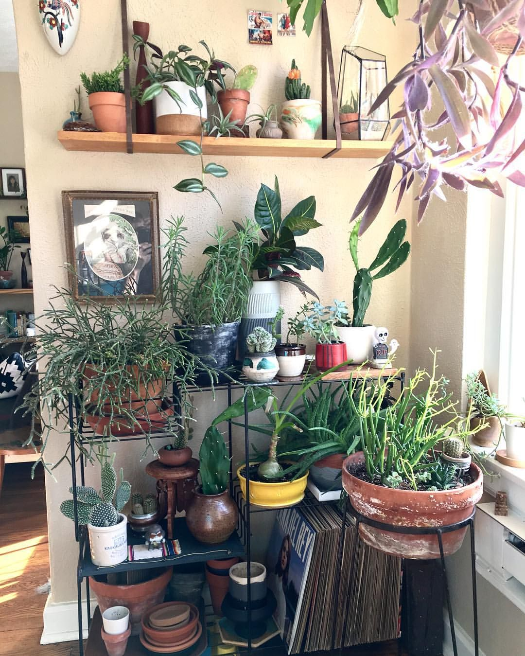 Plants Inside Rooms: See This Instagram Photo By @rajaliam • 1 Like