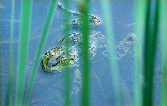 Wasserfrosch - Jahreszeiten - Galerie - Community