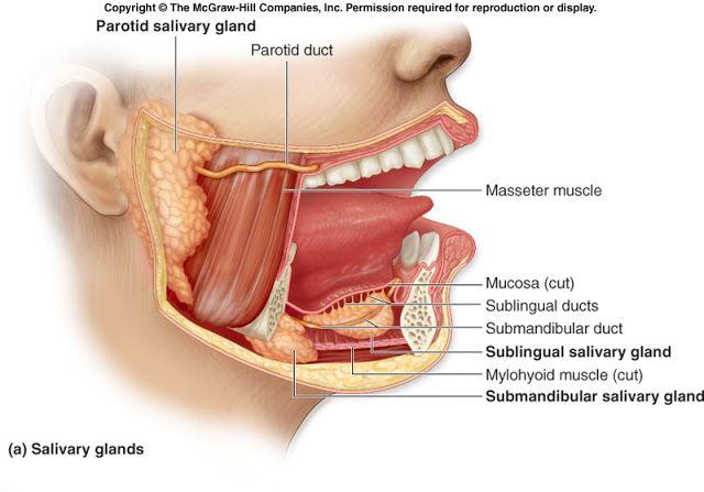 swollen submandibular lymph node
