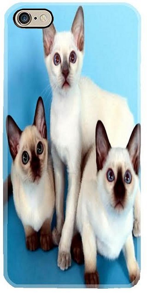 Iphone 6 7 6s 7 Plus Cell Mobile Phone Case Cover Siamese Cat Kitten Party Kitty Handmade Cats And Kittens Siamese Cats Beautiful Cats