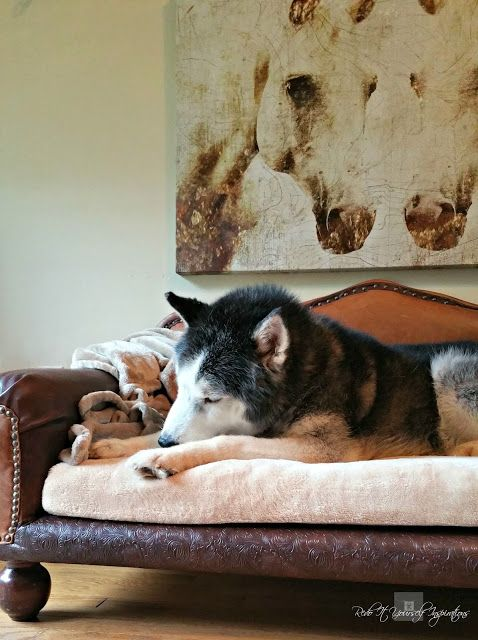 Diy Leather Dog Sofa Bed How To Build A