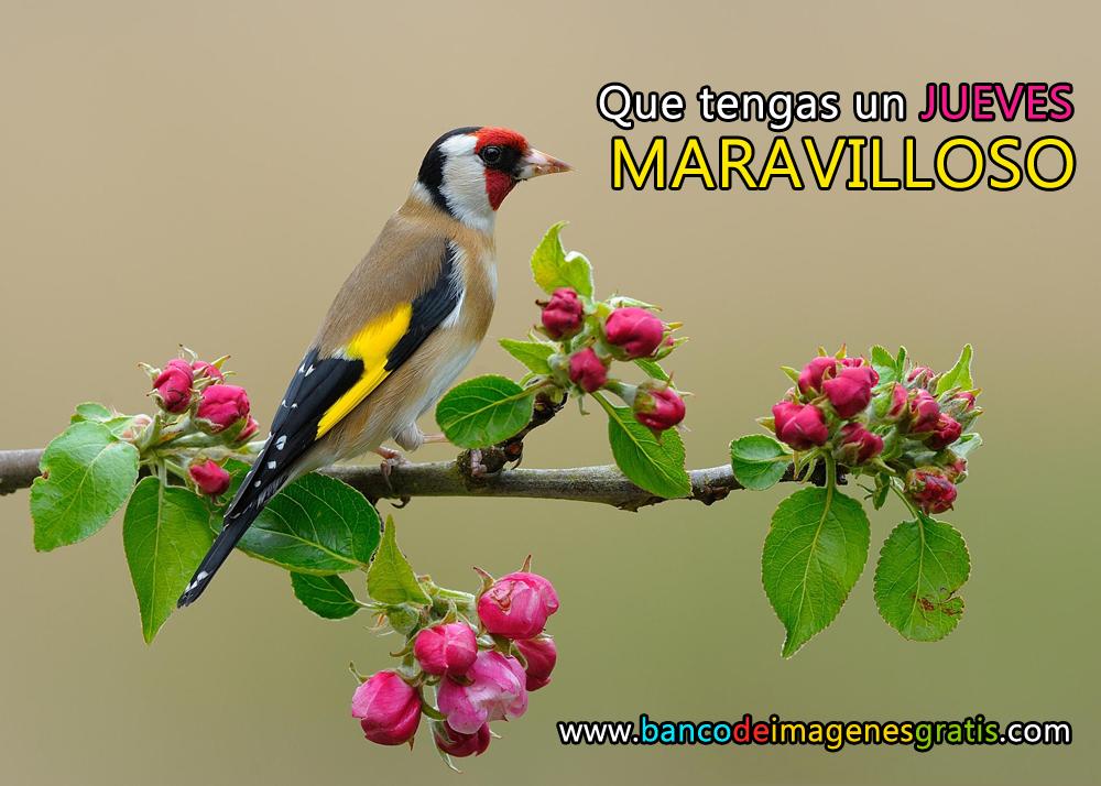 Pajarillo Con Frutillas En El Bosque Con Mensaje De Feliz Jueves Para Compartir Png 1000 714 Pajaros Hermosos Ave Silvestre Fotos De Aves
