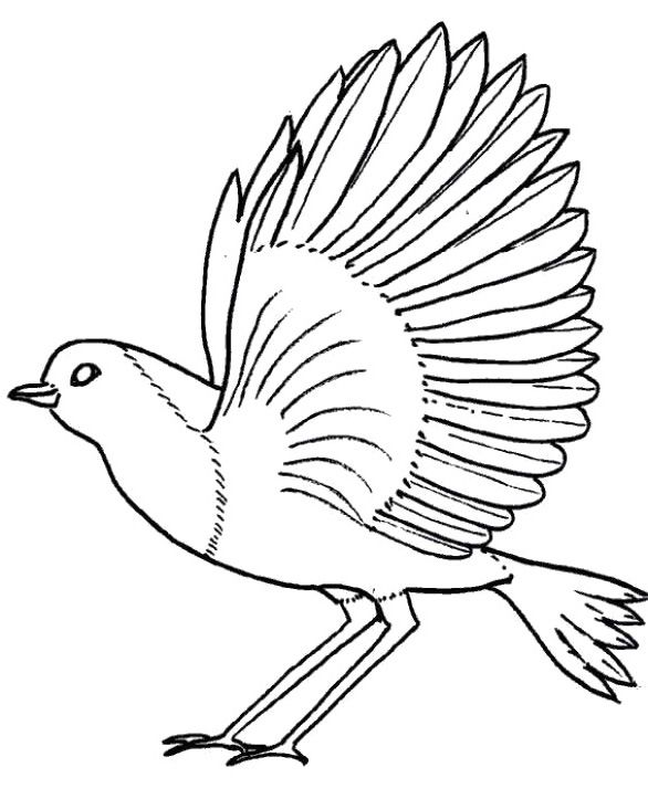 Bird Robin Fly Coloring Pages With Images Bird Coloring Pages