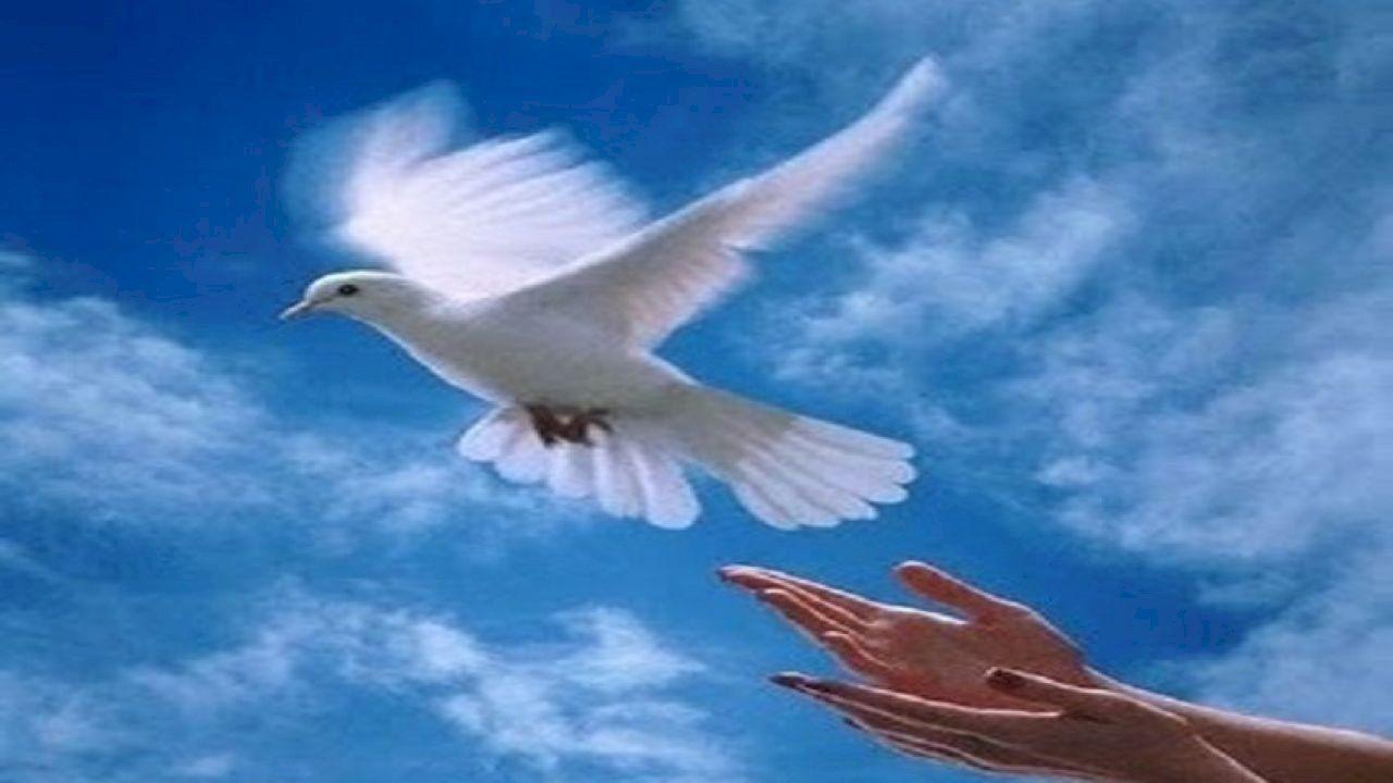 موضوع تعبير عن الحرية Dalai Lama Bird Beautiful Pictures