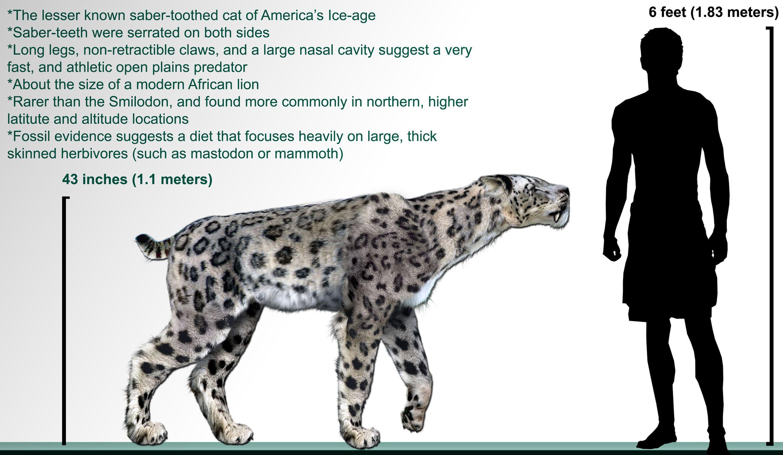 homotherium serum homotherium is an extinct genus of