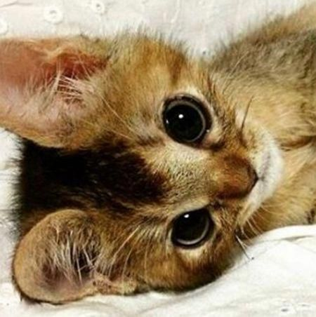 Pin By Shawnszdezines On Kitty Kitty Kittens Cutest Cats And Kittens Cute Cats