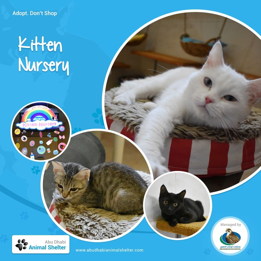 The Cutest Sweetest Kittens Await Loving New Owners At The Adas Kitten Nursery Drop By To Meet Them And Find Your Dream One Animal Shelter Animals Dog List