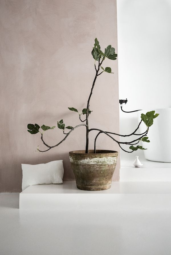 Lime paint and plant