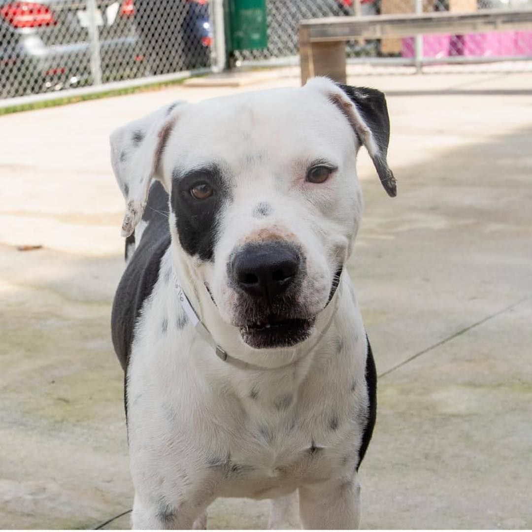"""Miami Dade Shelter on Instagram """" URGENT LAST CALL FOR"""