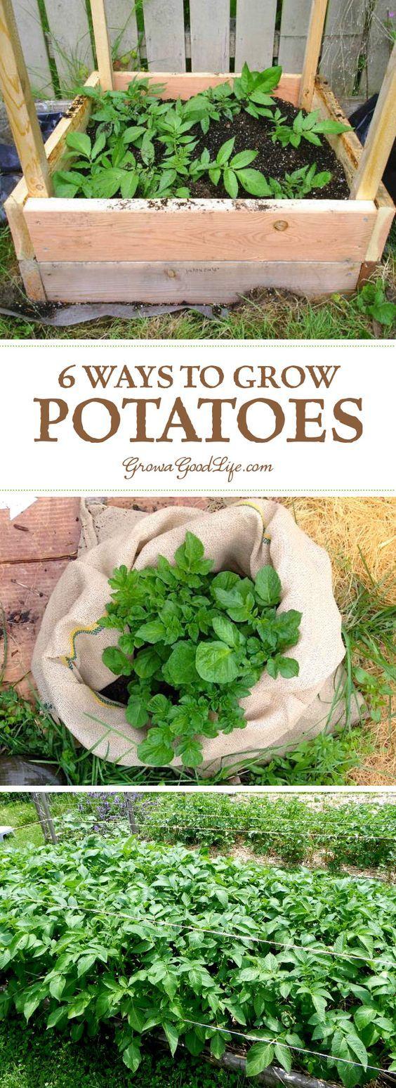 6 ways to grow potatoes grow potatoes fingerling potatoes and