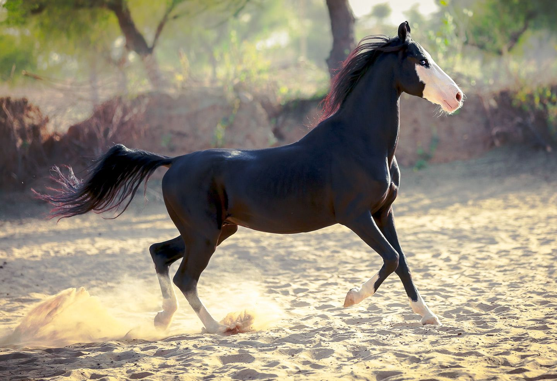 Новые картинки с лошадьми