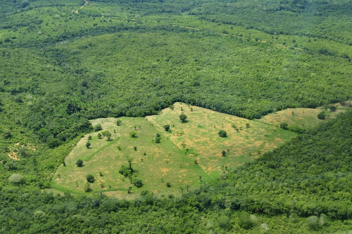 Brazil Busts Gang Accused Of Amazon Rainforest Deforestation