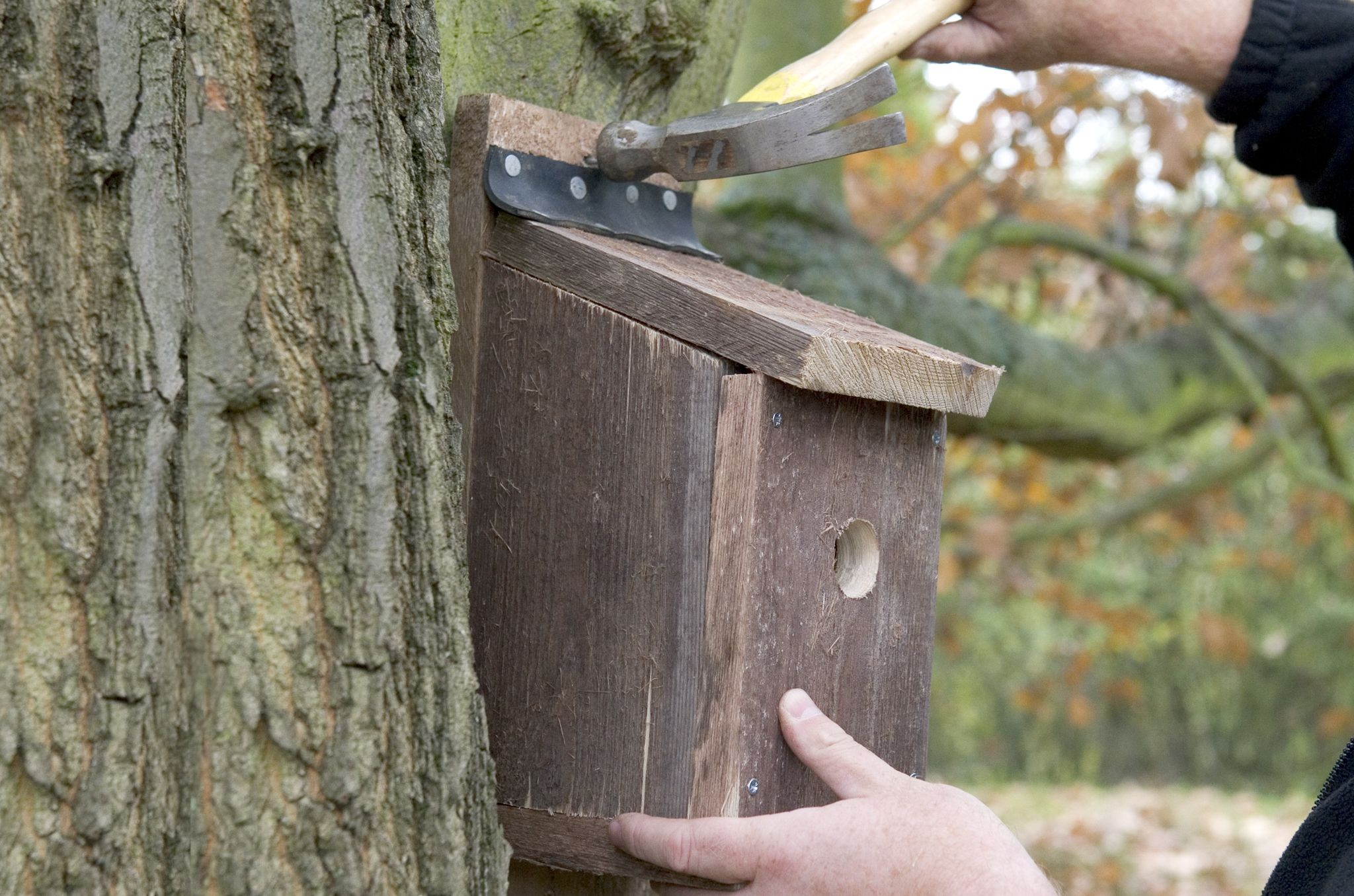 Provide a nest site for birds by creating a hinged nest box in six easy steps, with our practical guide from the experts at BBC Gardeners' World Magazine.