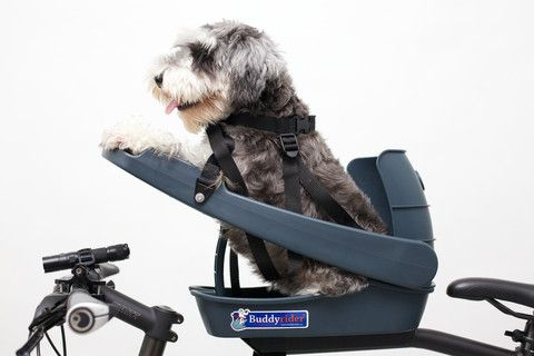 BuddyRider Bicycle Pet Seat for Dogs www.BuddyRiderDownunder.com... Another Great product photo by Renesis from Singapore