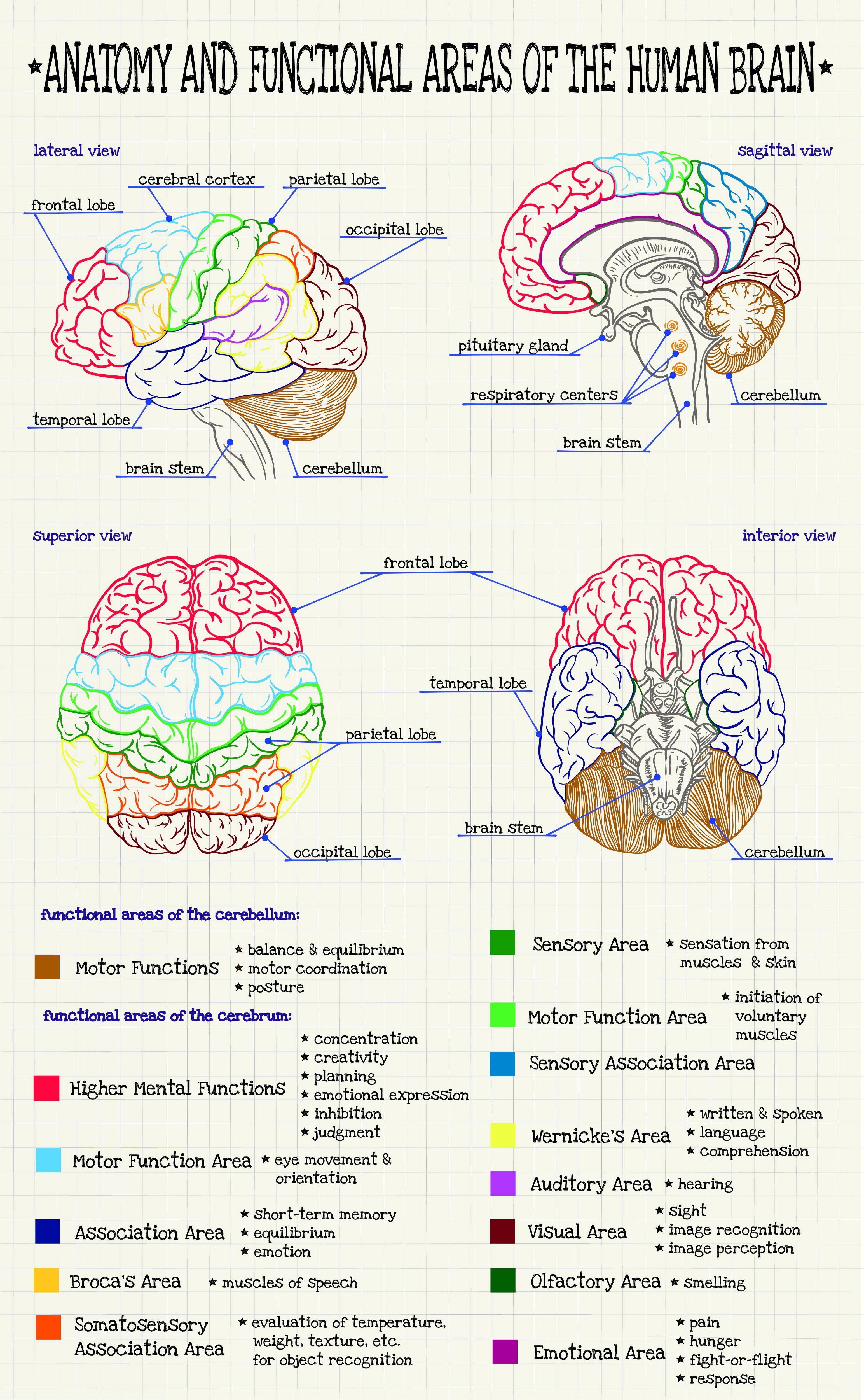 Pin de Sílvia Vitória en Anatomia | Pinterest | Medicina, Apuntes y ...