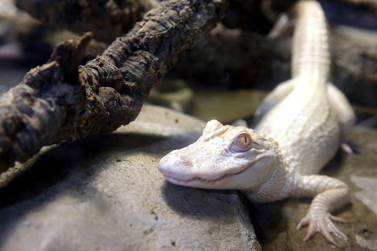 Animal tracks: Feb. 10 - 16- slideshow - slide - 4 - TODAY.com