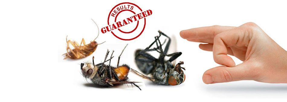 Pest Control Brisbane Termite Inspection Bee Pest Control Termite Control