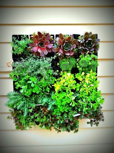 Brightgreen Bg8 Grovert Living Wall Planter With Mounting Strip Succulent Patio Lawn Garden