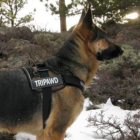 Ezydog Convert Harness Great For Walking Tripawd Dogs Dog Cancer