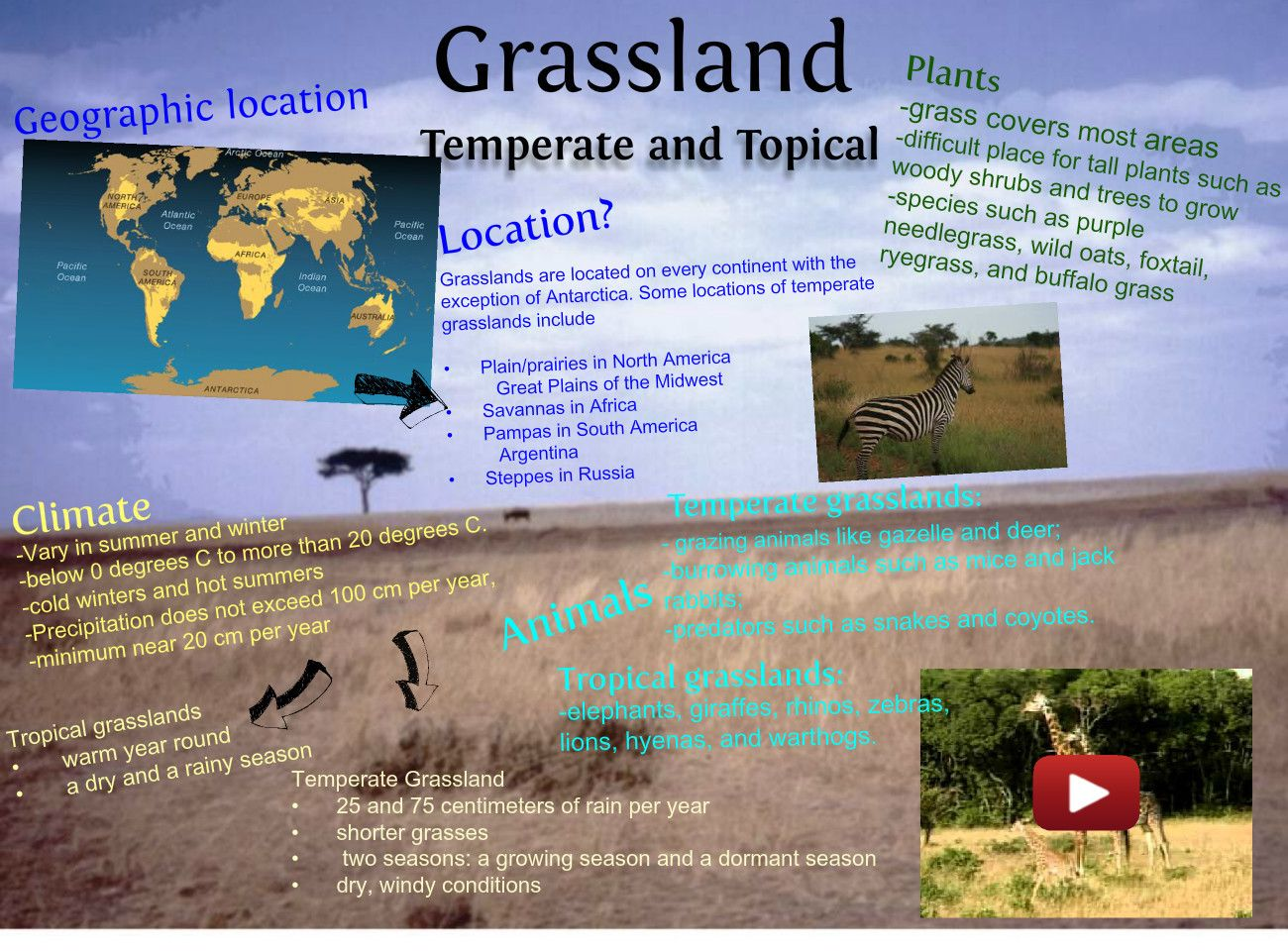 Grassland Shoebox Project