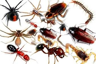 How Do Insects Breathe An Outline Of The Tracheal System Pest Control Services Best Pest Control Pest Control