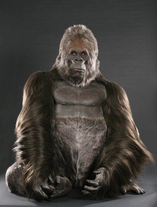 Rick Baker full-size African Mountain Gorilla | Props in