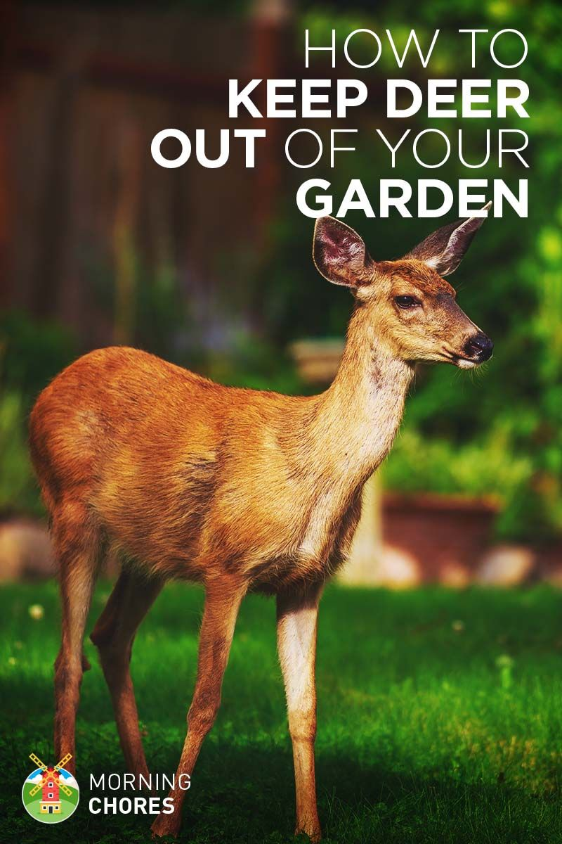21 Ways to Keep Deer Out of Your Garden and Plants Without Killing