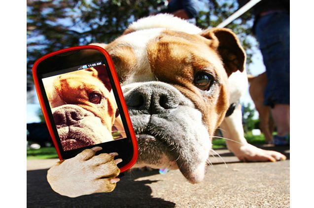 How To Train Your Dog to Take a Selfie Training your dog