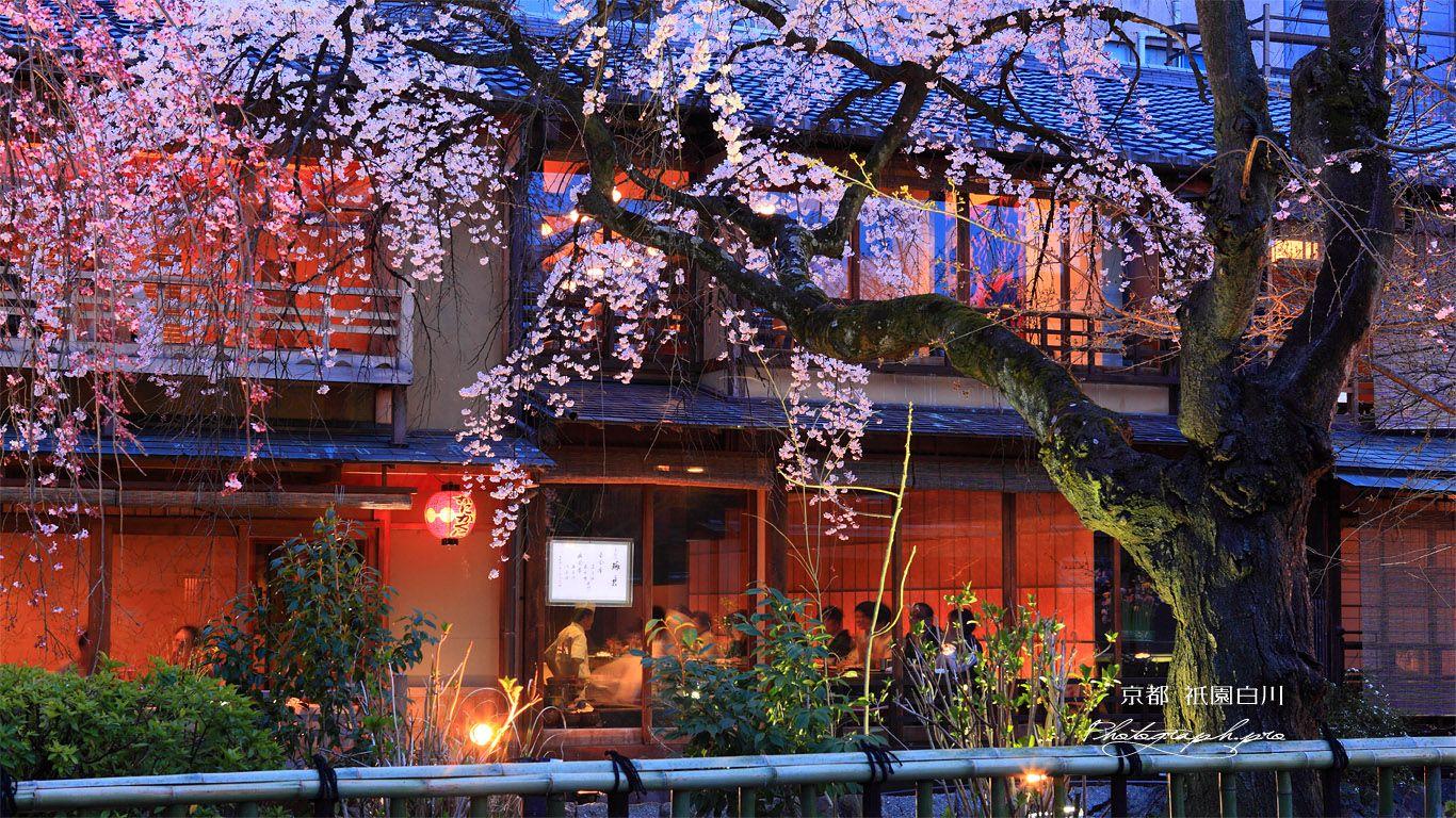 祇園白川宵桜ライトアップ 壁紙 壁紙 ライト アップ