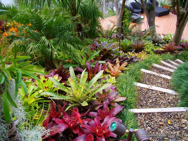 Gallery bromeliads nz tropical landscaping pinterest for Landscaping ideas nz