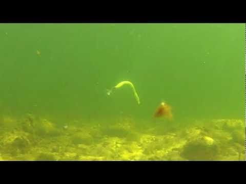 Bass Fishing - Plastic Baits Gone Wild