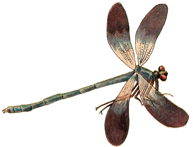 Dragonfly Png 768 583 Damselfly Dragonfly Insects