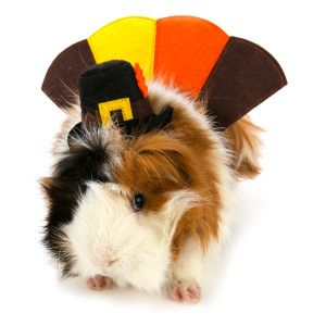 All Living Things Pet Halloween Turkey Small Pet Costume Costumes Petsmart Pet Costumes Pet Halloween Costumes