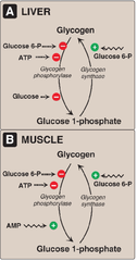Constitution and biosynthesis of lignin pdf to excel